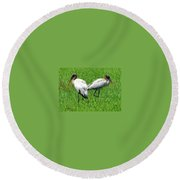 Young Wood Storks 2 Round Beach Towel