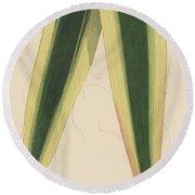 Yucca Leaf Round Beach Towel