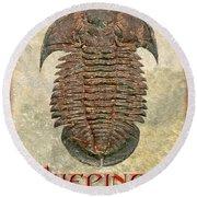 Yuepingia Fossil Trilobite Round Beach Towel