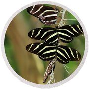 Zebra Butterflies Hanging On Round Beach Towel