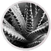 Zebra Cactus Bw Round Beach Towel