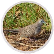 Zebra Dove Round Beach Towel