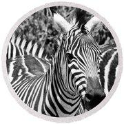 zebra Family Round Beach Towel