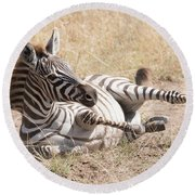Zebra Foal Rolls In Dust On Savannah Round Beach Towel