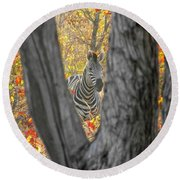 Zebra In Mopane Textures Round Beach Towel