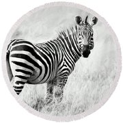 Zebra In The African Savanna Round Beach Towel