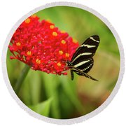 Zebra Long Wing Butterfly Round Beach Towel