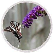 Zebra Swallowtail Butterfly 2 Round Beach Towel