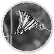 Zebra Swallowtail Butterfly Black And White Round Beach Towel