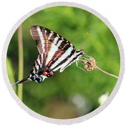 Zebra Swallowtail Butterfly In Garden 2016 Round Beach Towel