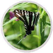 Zebra Swallowtail Butterfly In Green Round Beach Towel
