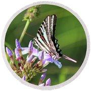 Zebra Swallowtail Butterfly On Phlox Round Beach Towel