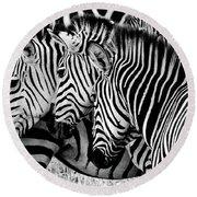 Zebras Triplets Round Beach Towel