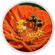 Zinnea With Honeybee Round Beach Towel