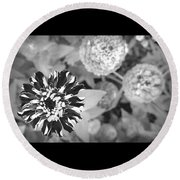 Zinnia In Black And White  Round Beach Towel