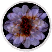 Zinnia On Black Round Beach Towel