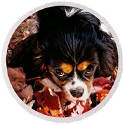 Zoeh - Look Into My Eyes Round Beach Towel