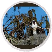 Zombie Osprey Crying For Brains Round Beach Towel