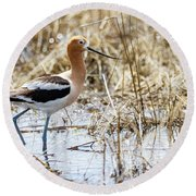American Avocet Round Beach Towel by Michael Chatt
