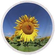 Bee On Blooming Sunflower Round Beach Towel