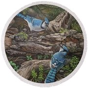 Blue Jay Stand Off Round Beach Towel