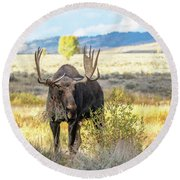 Bull Moose Round Beach Towel by Michael Chatt