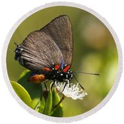 Great Purple Hairstreak Round Beach Towel