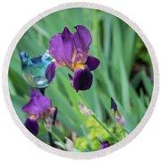 Iris In The Cottage Garden Round Beach Towel