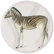 Mountain Zebra  Dauw  Illustrated By Charles Dessalines D' Orbigny  1806-1876  Round Beach Towel