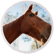 Horse In A Countryside Round Beach Towel
