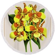 Orchid Vintage Print On Tinted Paperboard Round Beach Towel