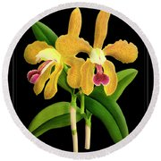 Vintage Orchid Print On Black Paperboard Round Beach Towel