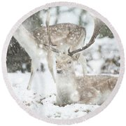 Beautiful Image Of Fallow Deer In Snow Winter Landscape In Heavy Round Beach Towel