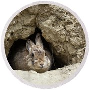 Cottontail Rabbit Round Beach Towel by Michael Chatt