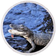 Little Gator Round Beach Towel