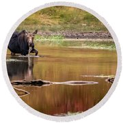 Moose At Green Pond Round Beach Towel