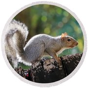 Squirrel Friend Round Beach Towel