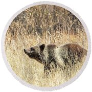 Grizzly Bear Round Beach Towel by Michael Chatt