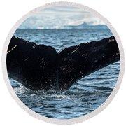 Whale In The Ocean, Southern Ocean Round Beach Towel