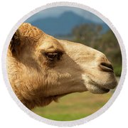 Camel Out Amongst Nature Round Beach Towel