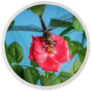 Dragonfly On A Flower Of A Red Rose. Macro Photo Round Beach Towel
