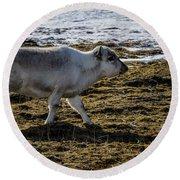 Svalbard Reindeer Round Beach Towel