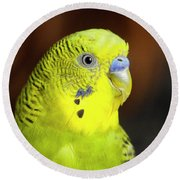 Portrait Of Budgie Birds Round Beach Towel