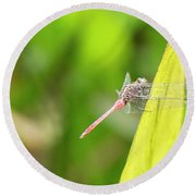 Small Beautiful Dragonfly Round Beach Towel