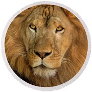 656250006 African Lion Panthera Leo Wildlife Rescue Round Beach Towel by Dave Welling