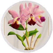 Orchid Vintage Print On Colored Paperboard Round Beach Towel