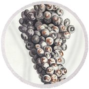 A Bunch Of Grapes By Johan Teyler  1648-1709  Round Beach Towel
