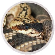 A Close Up Of A Mojave Rattlesnake Round Beach Towel