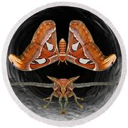 A Is For Atlas Moth Round Beach Towel