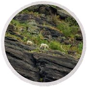 A Mother Mountain Goat And Her Kid Above Avalanche Lake Round Beach Towel by Belinda Greb
